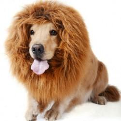 déguisement de lion pour chien